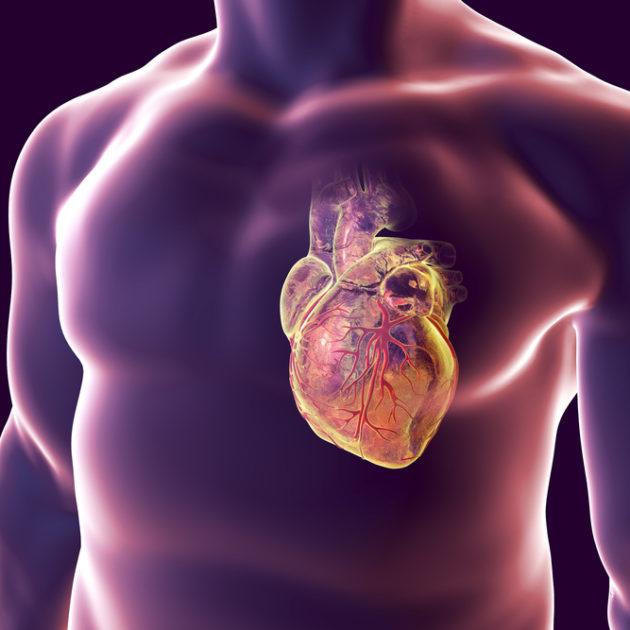 Při lupénce si bedlivě hlídejte srdce